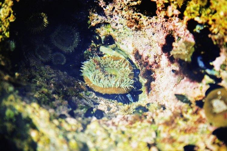 Los arrecifes de la ensenada La Jolla dan hogar a una variedad de especies marinas.