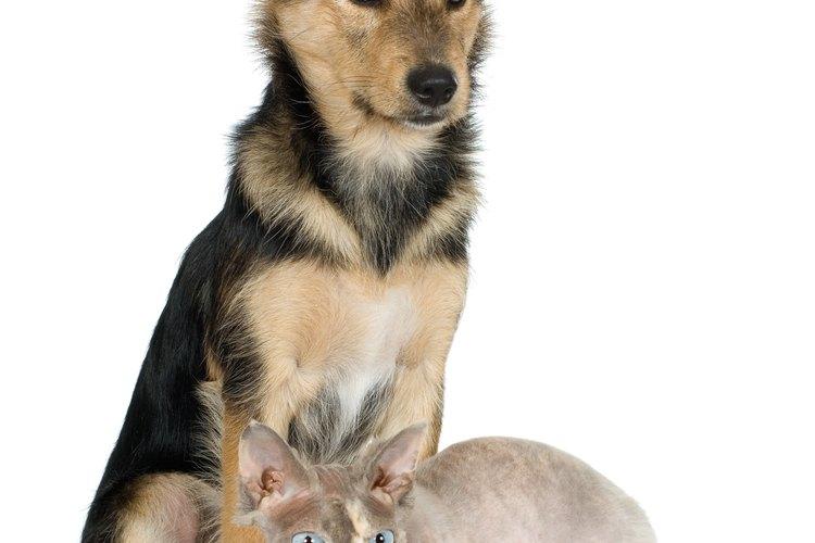 Las protectoras de animales ayudan a nuestros amigos.