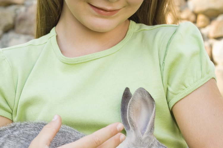 La agresividad y las mordeduras son un problema de comportamiento en los conejos.