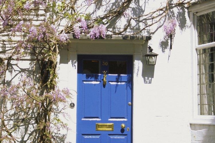 La wisteria es común en el sur de los Estados Unidos.
