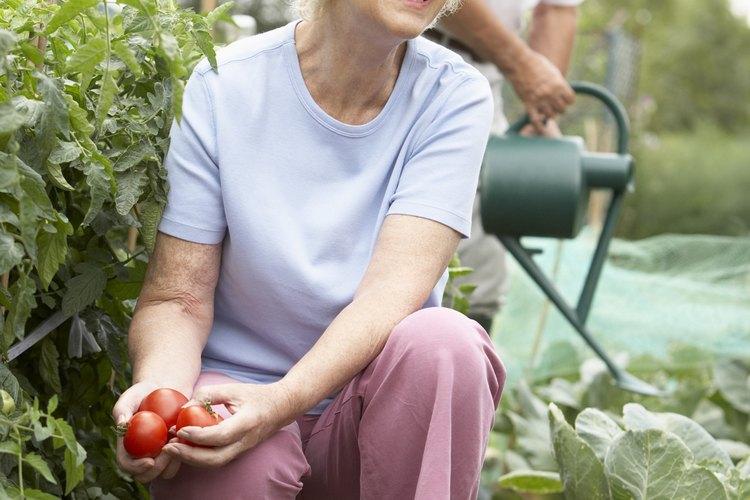 Poner una granja de vegetales puede ser un proyecto para mantenerte activo después de la jubilación.