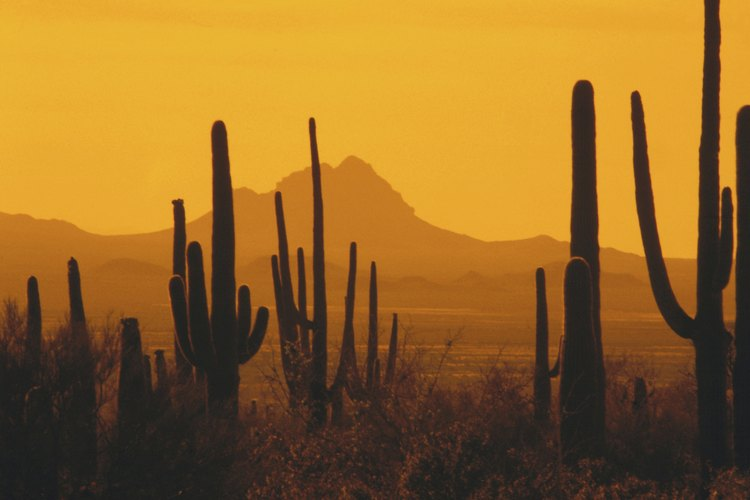 Varios tipos de cactus pueden prosperar en las condiciones del desierto tórrido debido a su capacidad de almacenar agua en sus hojas y tallos.