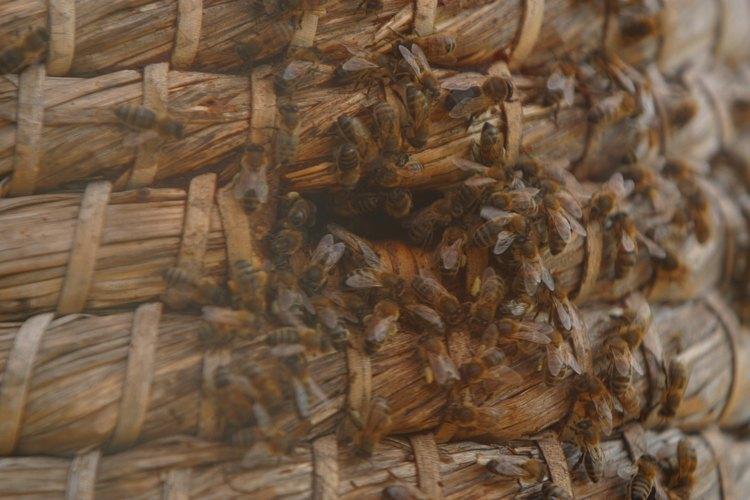 La aglomeración en un panal con frecuencia deja poco lugar para la reproducción.