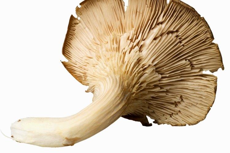 Cultiva tus propios hongos comestibles en tu sótano o despensa.
