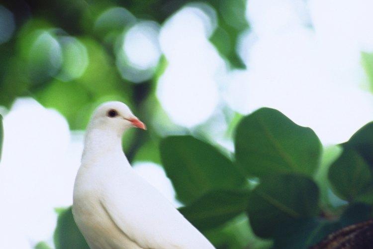 Los piojos pueden causar daños a las plumas y graves irritaciones en la piel.