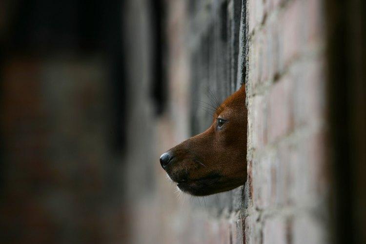 Perro en un refugio de animales.