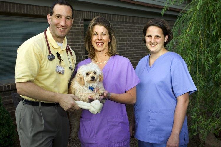 Se espera que el campo técnico veterinario experimente un rápido crecimiento y ofrezca numerosas oportunidades de empleo y un futuro relativamente seguro.