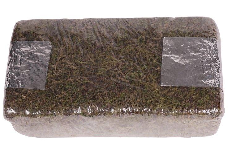 Utiliza medios ricos para macetas conteniendo musgo de turba para las plantas de yuca enmacetadas.