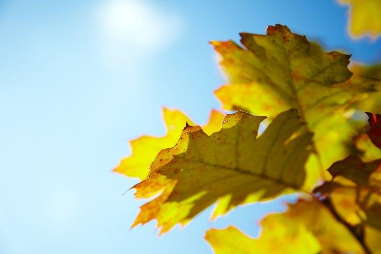Ofrece a los niños actividades con hojas durante la unidad del tema del otoño.