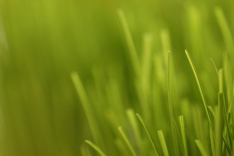 Evita cortar el césped en el jardín si se ve con problemas o descolorido.