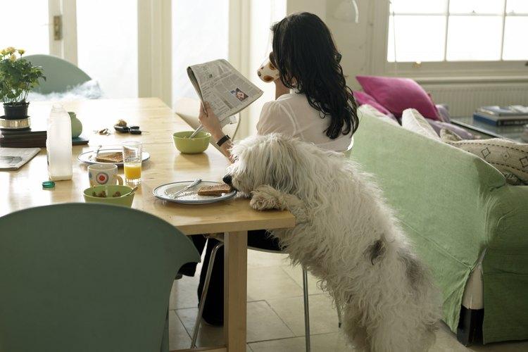 En los tiempos modernos, los perros ya no trabajan tanto como guardianes y son más bien compañeros de la familia.