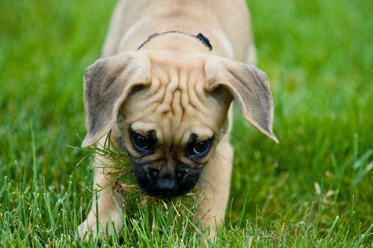 Por su naturaleza los perros tienden a raspar todo y, por lo tanto, pueden dañar tus muebles y tus puertas.