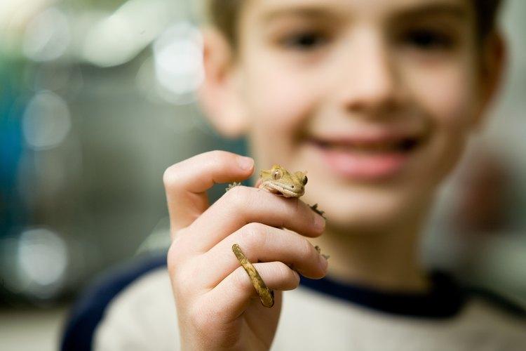 Un acuario auto-regado puede ser el hogar para un pequeño lagarto