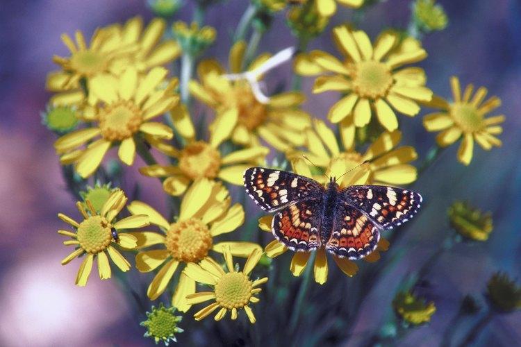 La mayoría de las mariposas están activas sólo durante el día.