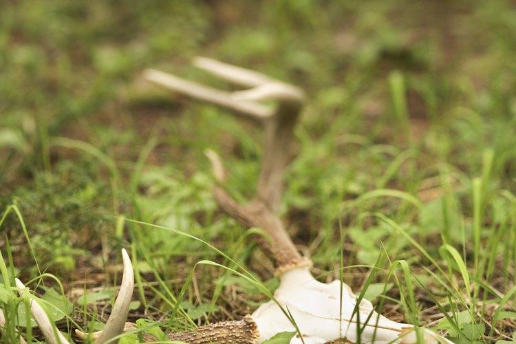 Los descomponedores realizan un servicio ecológico esencial descomponiendo la materia orgánica.