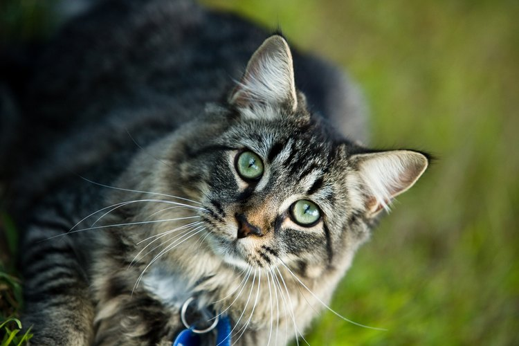 Puedes construir un recinto para que tu gato esté seguro y disfrute al aire libre.