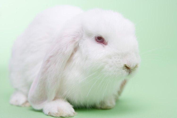 No hay ninguna razón por la cual no puedas tener un conejo en un apartamento.