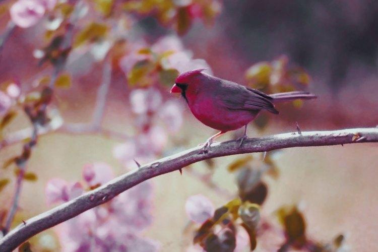 Los pájaros alegran cualquier jardín.