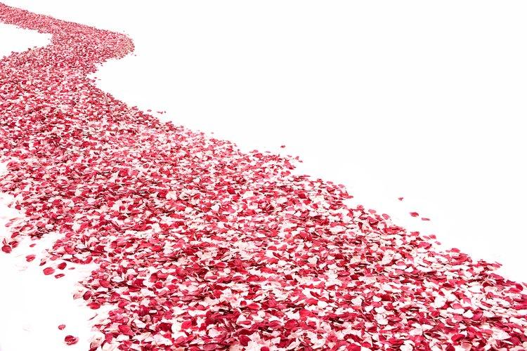 Los pétalos de rosas pueden ser preservados por meses liofilizándolos.