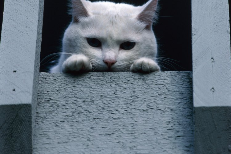 Los gatos con hipotiroidismo también pueden experimentar debilidad.