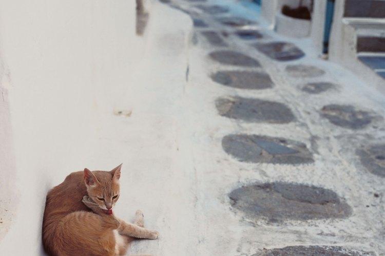 Aleja los gatos callejeros de tu hogar.