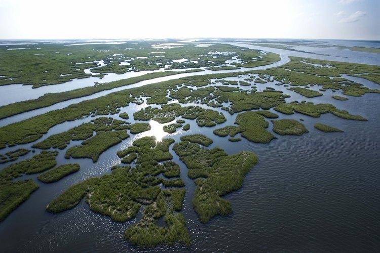 Pantano en Louisiana.