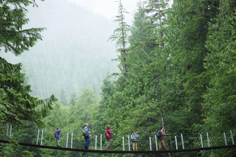 Asegura tu puente a ambos lados del cruce atándolo a un árbol, roca u otro objeto sólido.