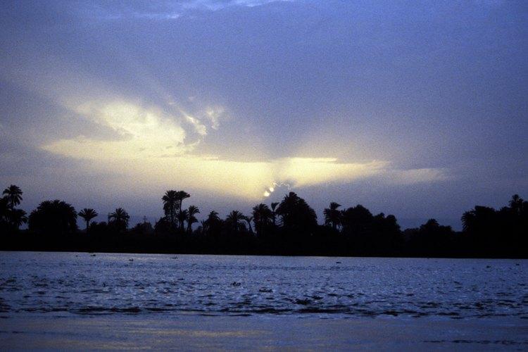 El algodón egipcio crece en la orilla del Nilo.