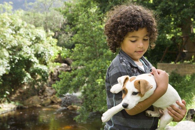 Desinfecta la casa y el patio para evitar que los perros se infecten.
