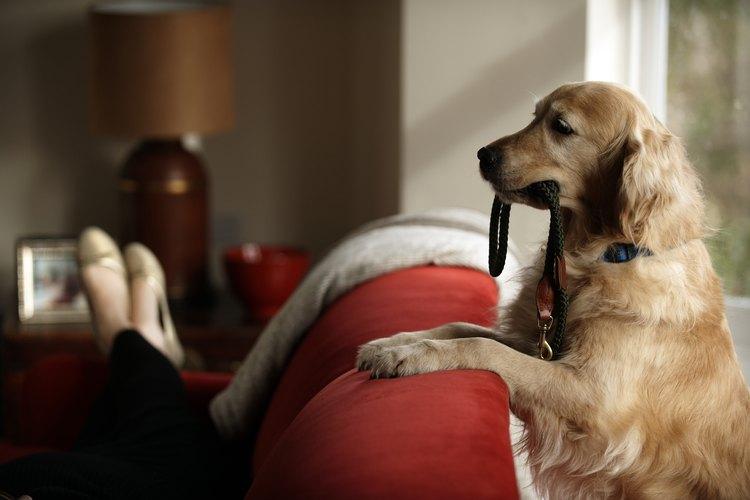 Crea un espacio cómodo para que duerma tu perro.