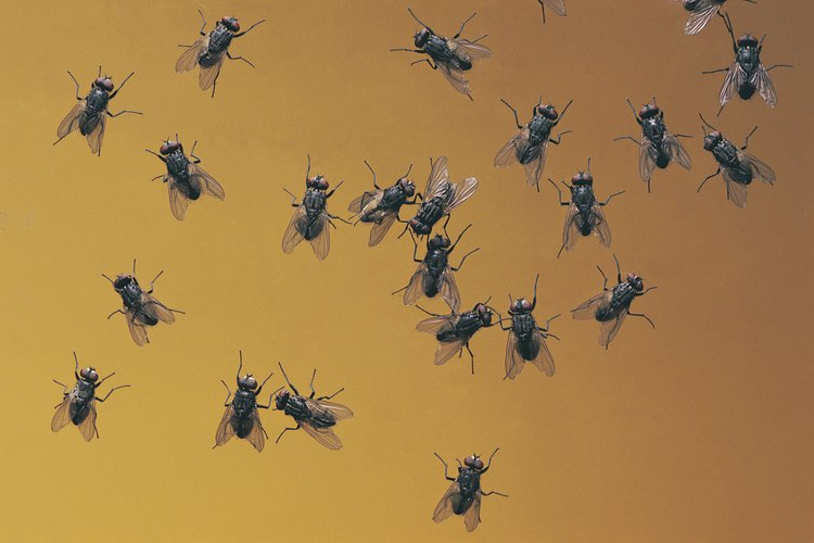 Colgar bolsas con agua puede ayudar a mantener los enjambres de moscas lejos de tu área de picnic.
