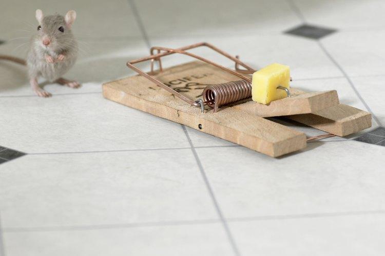 Sólo el cebo correcto atraerá y atrapará ratones.