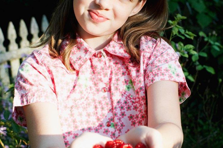 Planea un gran cosecha de frambuesas comenzando el segundo año después de haberlo plantado.