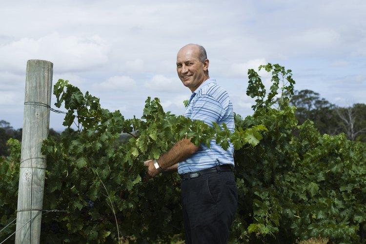 El mantenimiento anual de la vid es fundamental para el cultivo de uvas.