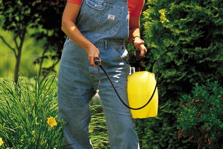 Rocía la planta de áloe vera con un insecticida que esté registrado para su uso en plantas de interior.
