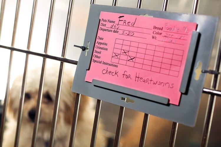 De acuerdo a la ASPCA se reportaron 2300 casos de ingesta de fertilizantes en el 2009.