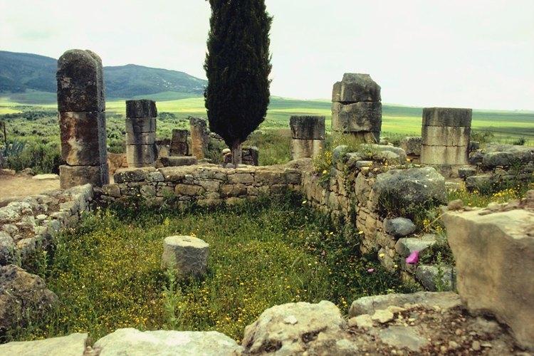 El ciprés mediterráneo es resistente a las sequías.