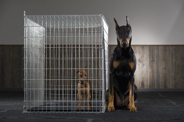 La jaula debe ser proporcionada al tamaño de tu perro.