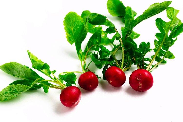 Distribuye 2 a 4 tazas de un fertilizante granular, balanceado tal como 16-16-8 o 10-10-10 (los números indican los porcentajes de nitrógeno, fósforo y potasio en el producto) sobre el lugar de la plantación donde los rábanos serán plantadas.