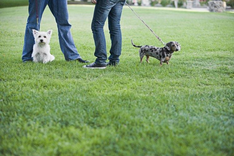 """Los perros más pequeños tienen menos """"poder de retención"""" que los perros más grandes."""