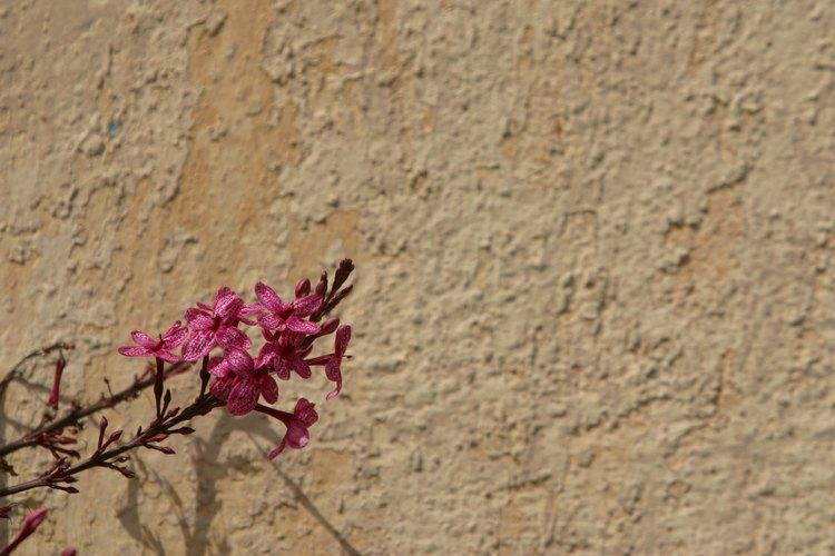 El adobe puede ser un gran material de construcción para paredes en las casas desérticas.