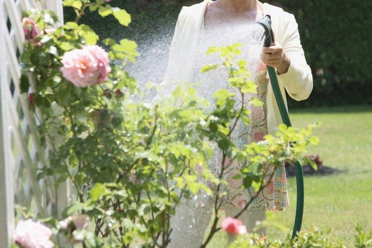 Trata a tus plantas con jabón insecticida.