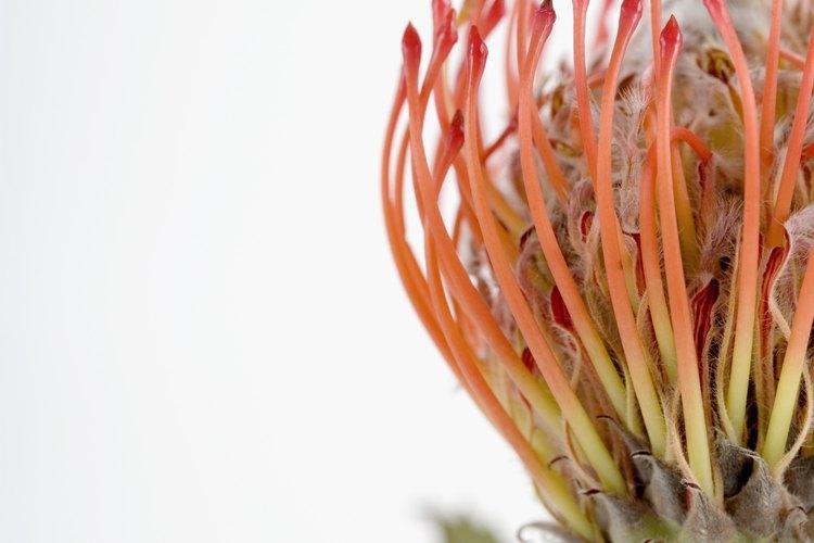 Los conservacionistas tratan de preservar la diversidad de especies de plantas mediante la protección de los ecosistemas que contienen especies de plantas raras.