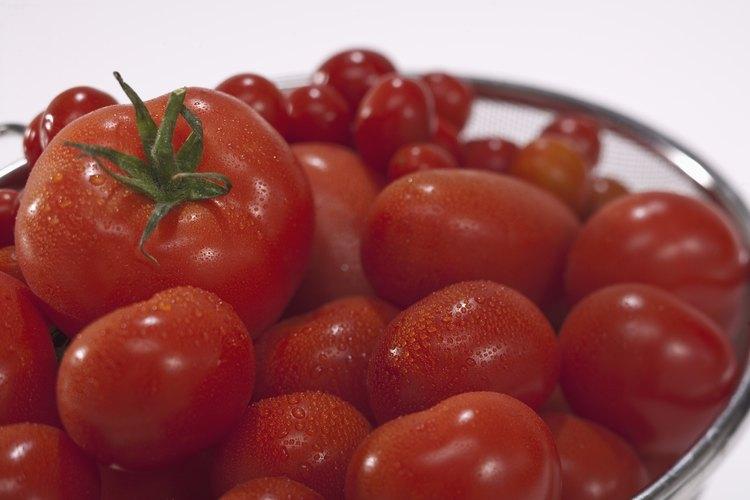 Los tomates pueden ser cultivados en recipientes o jardineras, así como también en los jardines.