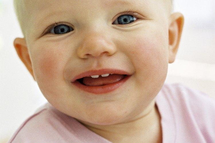 Los dientes de los bebés empiezan a crecer durante su primer año.