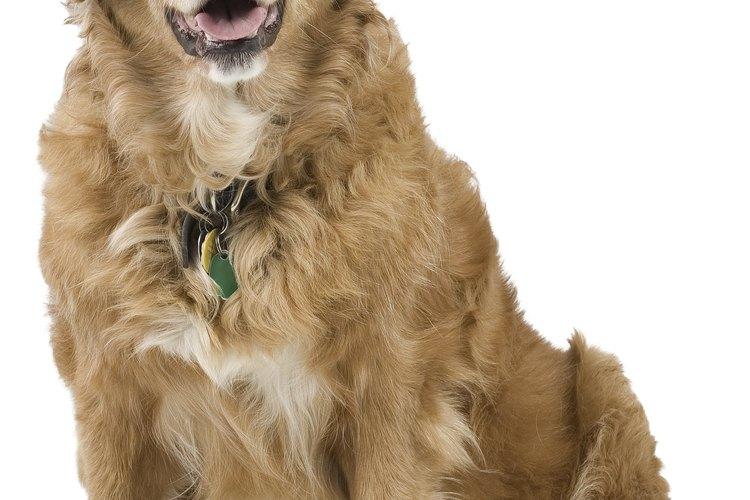 Tu perro no puede decirte qué es lo que está mal, así que tendrás que llevarlo al veterinario.