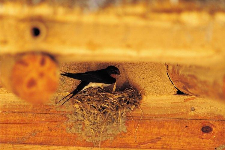 Material de nidificación.