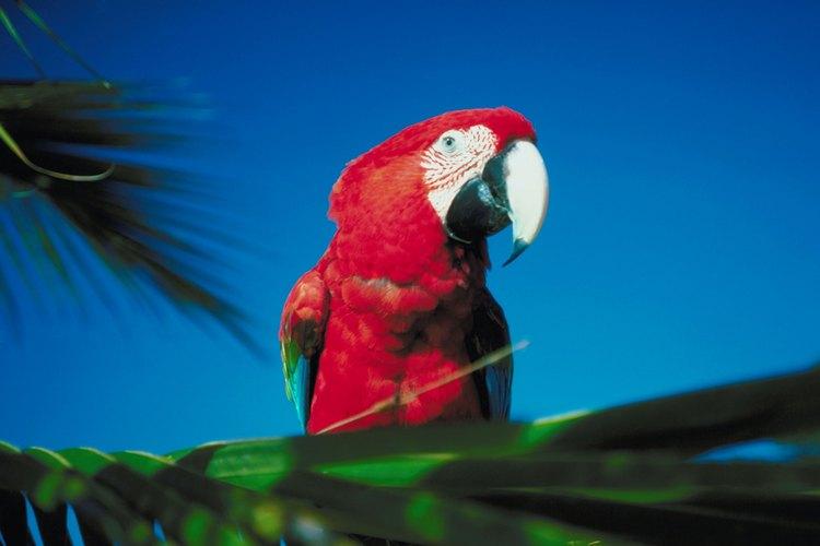 El clima de la selva es tropical y húmedo.