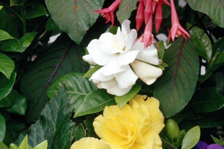 Una variedad de plantas de sombra en una sola maceta añade cierto atractivo artístico a tu hogar.