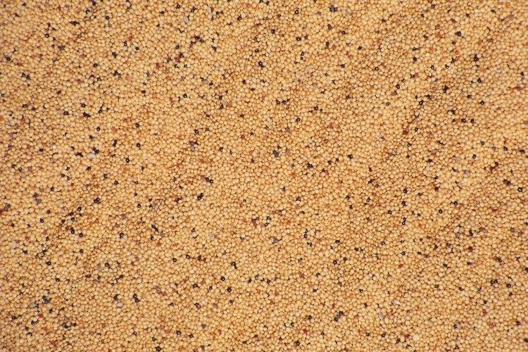 El mijo es un grano común en el alimento de las aves.